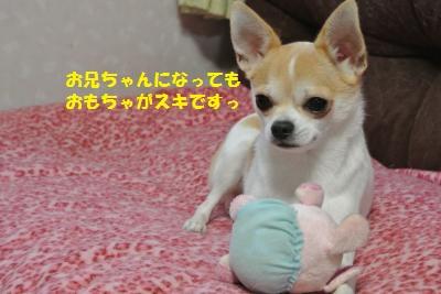 DSC_0370_convert_20131108111928.jpg