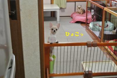 DSC_0387_convert_20131111094410.jpg