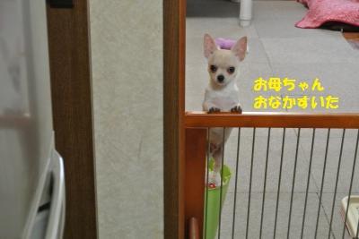 DSC_0388_convert_20131111094522.jpg