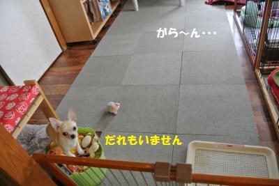 DSC_0408_convert_20131111094728.jpg