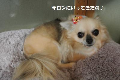 DSC_0415_convert_20131111094858.jpg