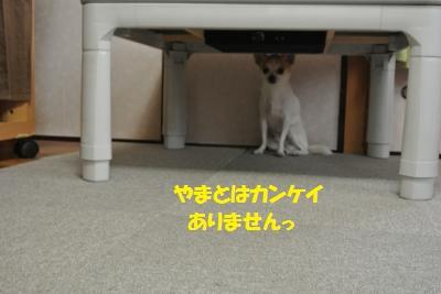 DSC_0560_convert_20131115144206.jpg