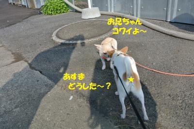 DSC_0587_convert_20131118102932.jpg