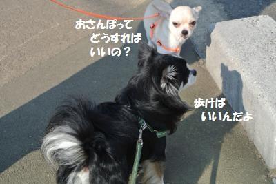 DSC_0591_convert_20131118103101.jpg