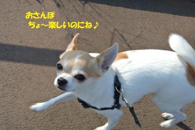 DSC_0608_convert_20131118103137.jpg