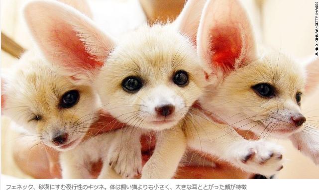 世界一可愛い動物