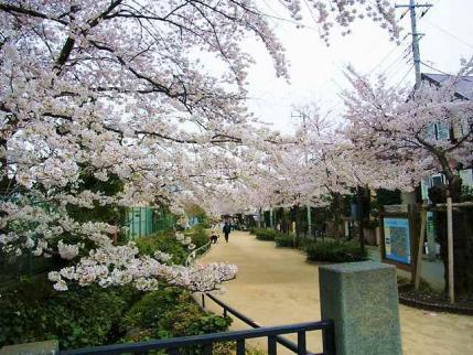 13-3-26 桜