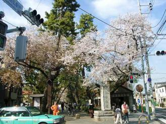 13-3-28 桜