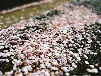 13-4-1 桜