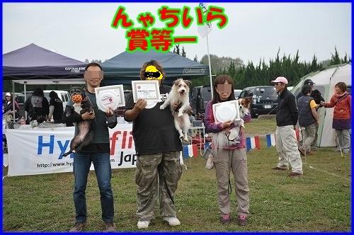 DSC_1146_201311062151553fd.jpg