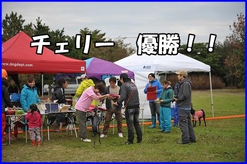 DSC_1332_2013111101315523a.jpg
