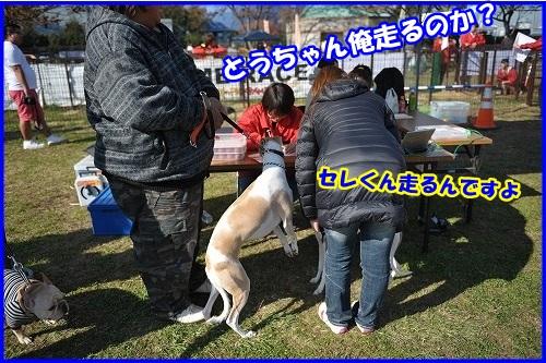 DSC_1366_20131125225525bd2.jpg