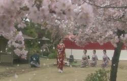 いかがなされました、桜姫様