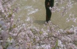 桜の樹の下にやって来た男
