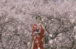 咲き乱れる桜の中にいる桜姫