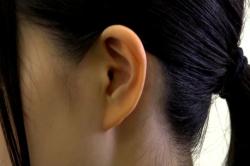 その美しい絵菜の耳