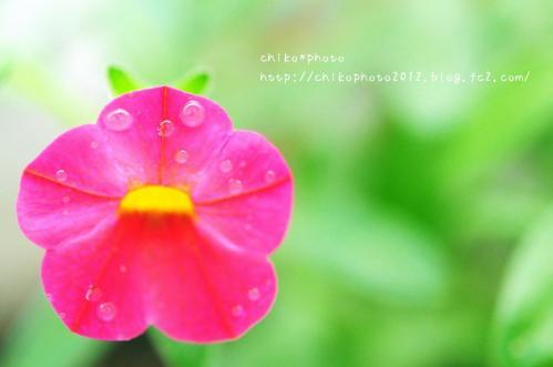 photo-302 雨粒2