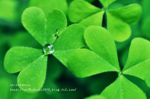 photo-306 雨粒3_1(0629)