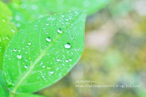 photo-307 雨粒4_1(0630)