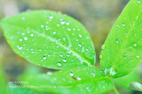 photo-307 雨粒4_2(0630)