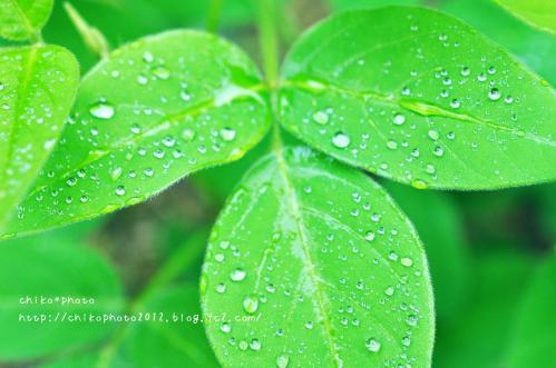 photo-307 雨粒4_3(0630)