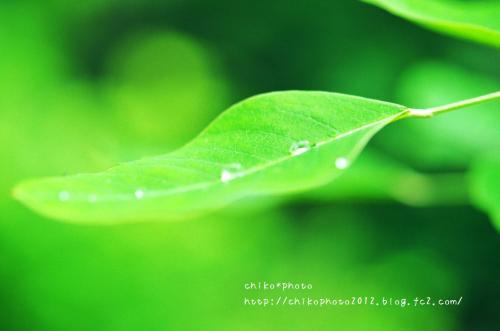 photo-301 雨粒1