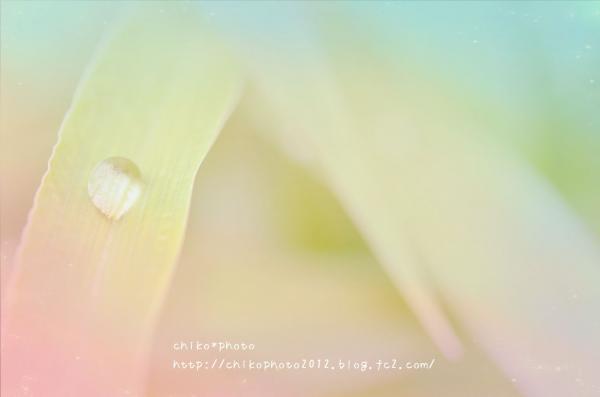 photo-332 雨つぶ一つぶエノコログサの葉