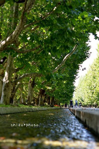 photo-347 プラタナス並木の水路2