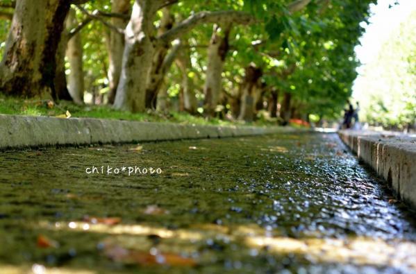 photo-347 プラタナス並木の水路1