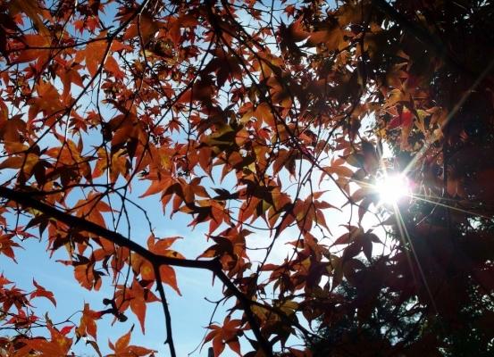 photo-373 紅葉の隙間から_20131120