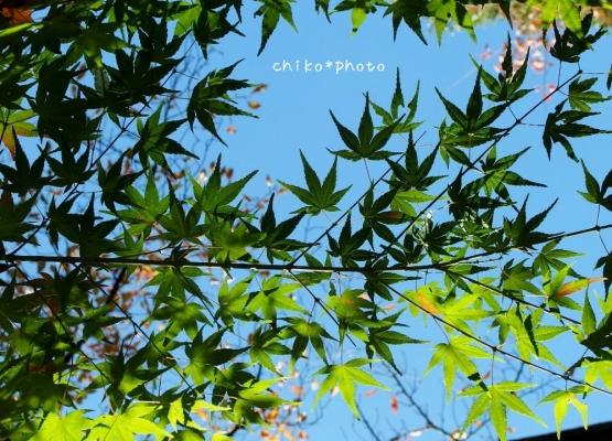 photo-374 秋空を背景に1_20131121