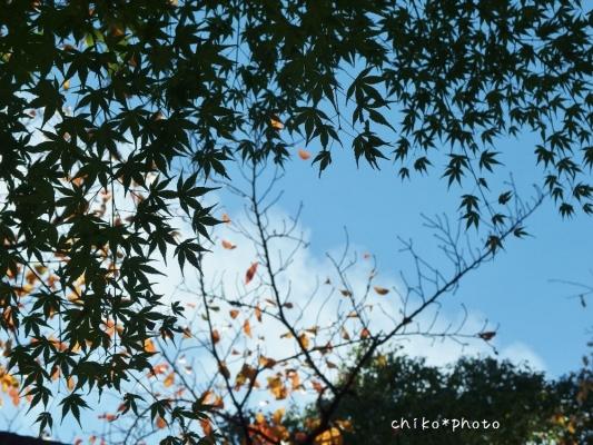 photo-375 秋空を背景に2_20131122
