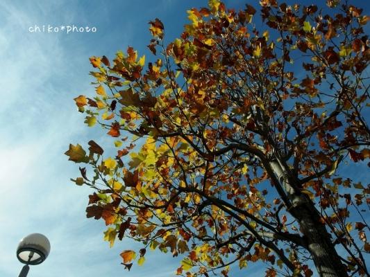 photo-376 秋空を背景に3_20131123