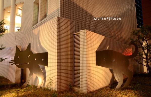 photo-383 壁抜け猫1