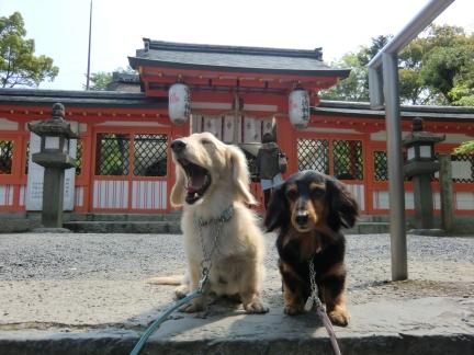 7宇治神社で大あくび