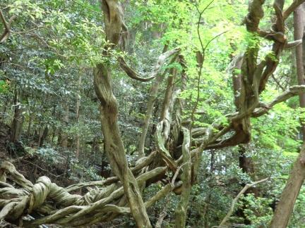 19ねじれた木の幹