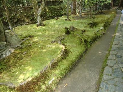 28苔の絨毯