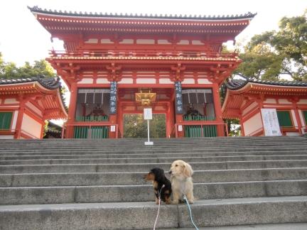 1朝の八坂神社