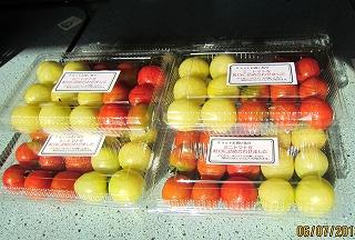ミニトマト初出荷