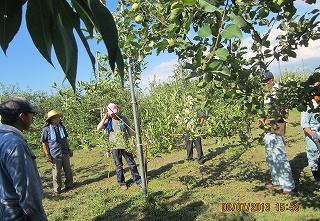 りんご園巡回