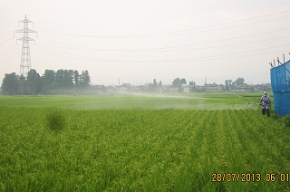早生稲の防除