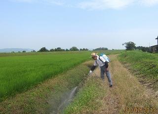 排水路除草剤(7・31)
