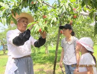 桃のつみ方