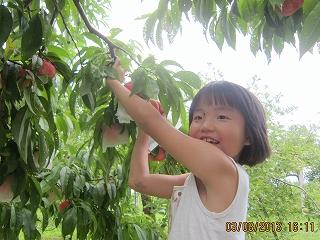 くみちゃん桃摘み
