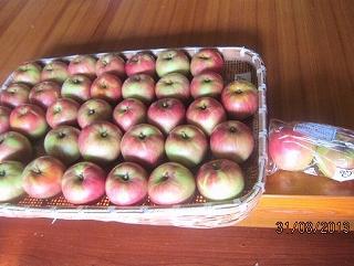リンゴ初出荷