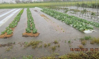 野菜畑水没