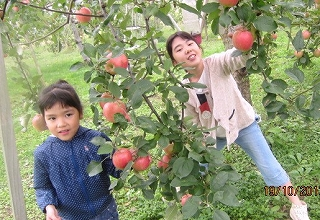 今度はリンゴ摘み