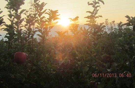 りんご園日の出採用