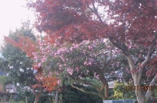 秋深まる・庭