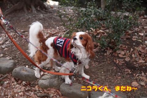 0201石神井公園
